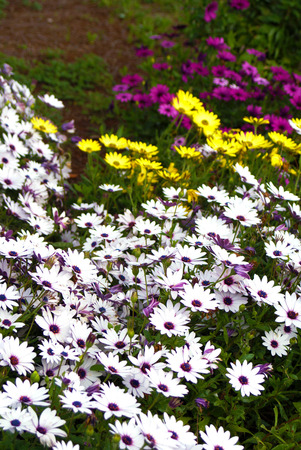 Bushes of colorful flowers Stock Photo