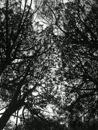 branches in black and white