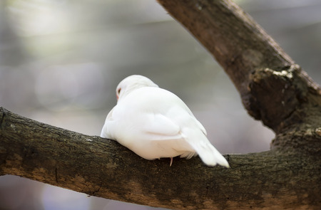 White java sparrow sitting in a tree bark resting back view