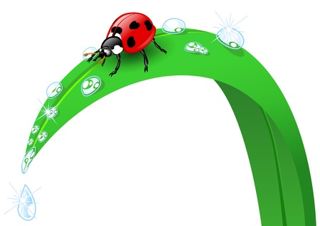 dewdrops: Illustration of a ladybird on a blade of grass Illustration