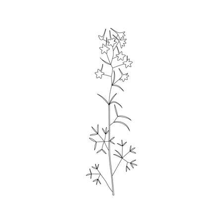 Vector line hand drawn illustration with Consolida regalis. Minimalist Flower and herb. Wildflower for design, tattoo, postcard