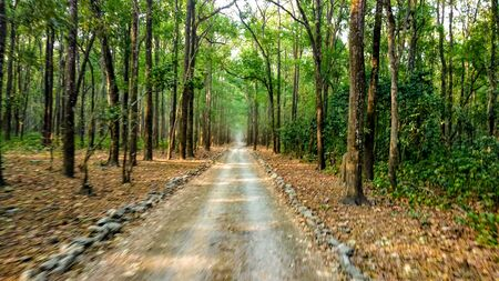 Jim Corbett National Park Tiger Forest in India