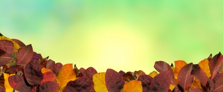 Colorfull autumn leaves Stock Photo