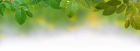 Green Panoramic Leaves