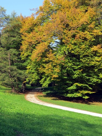 Park in the beginning of autumn