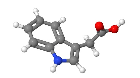 apical: Plant hormone - Auxins - Indole-3-acetic acid (IAA) - molecular model Stock Photo