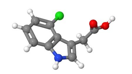 alargamiento: Hormona de la planta - Auxinas - 4-cloroindol-3-ac�tico �cido - 4-Cl-IAA