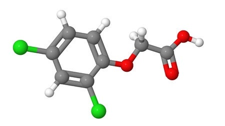 phytohormone: Plant hormone - Synthetic auxins - 2-4-D - molecular model