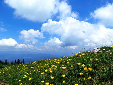 Alpine meadow with yellow flowers