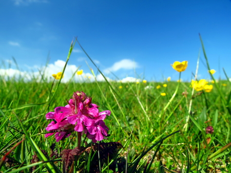 Alpine meadow with pink flower in foreground Stock Photo