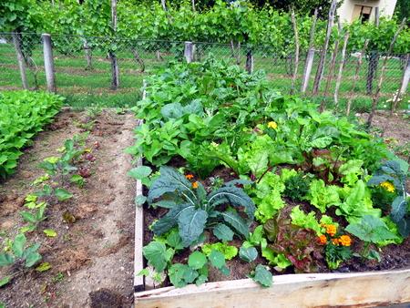 Vegetables in raised garden bed in permaculture garden