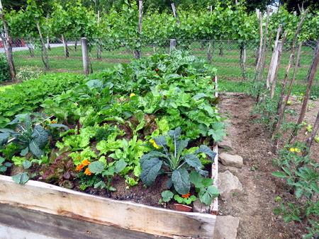 Vegetables in raised garden bed, permaculture garden Stock Photo
