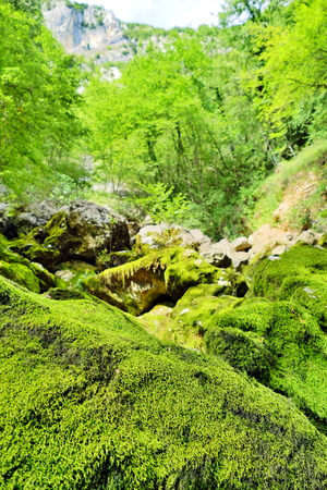 Green moss on rock surrounded by trees