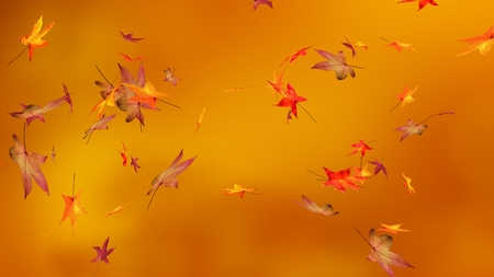 Autumn, blur background, maple leaves Stock Photo