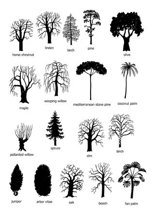 chestnut tree: 18 types of trees, black and white