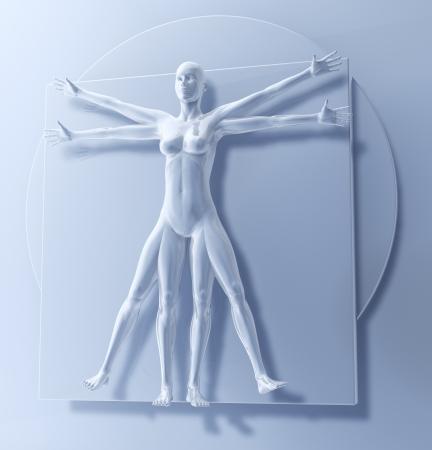 Leonardo Da Vinci s ウィトルウィウスマン、女性として、ヒトの方形、3 d レンダリング