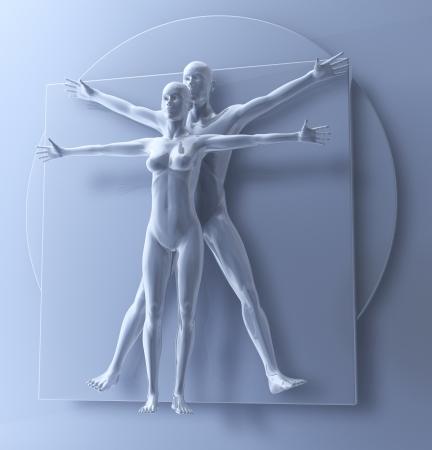 uomo vitruviano: Leonardo Da Vinci s Vitruviano Uomo E Donna, Homo Quadrato in coppia, il rendering 3D