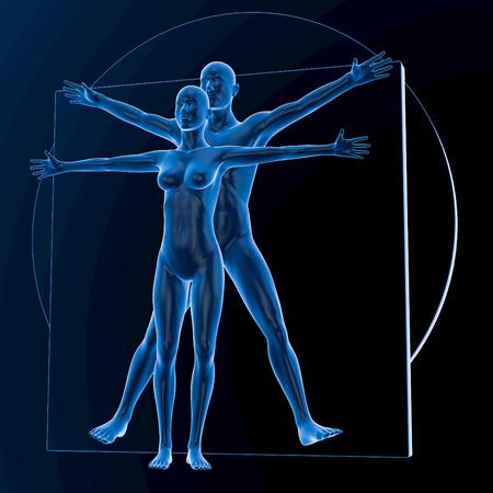 vitruvian man: Leonardo da Vinci de Vitruvio Hombre y Mujer, Pareja, azul transl�cido sobre fondo oscuro, sin huesos, representaci�n 3D Foto de archivo
