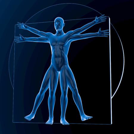 uomo vitruviano: Leonardo da Vinci Uomo Vitruviano, blu traslucido su sfondo scuro, senza ossa, rendering 3d Archivio Fotografico