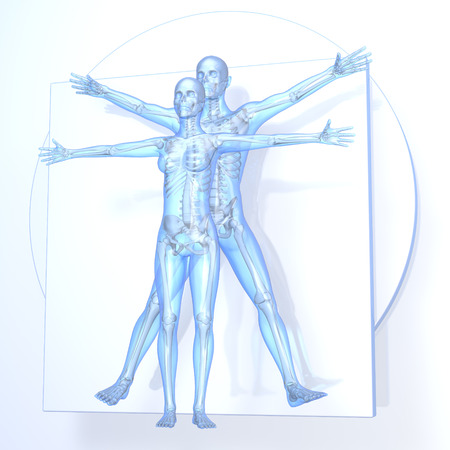 Leonardo da Vinci Vitruvian Man and Woman, Couple, transparent blue on white background, with bones, 3d rendering
