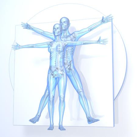 Leonardo da Vinci Vitruvian Man en Vrouw, Koppel, transparant blauw op een witte achtergrond, met botten, 3D-rendering