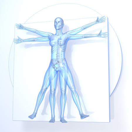 Leonardo ダ ・ ヴィンチ ウィトルウィウス女性、骨、3 d レンダリングと、白の背景上の透明な青