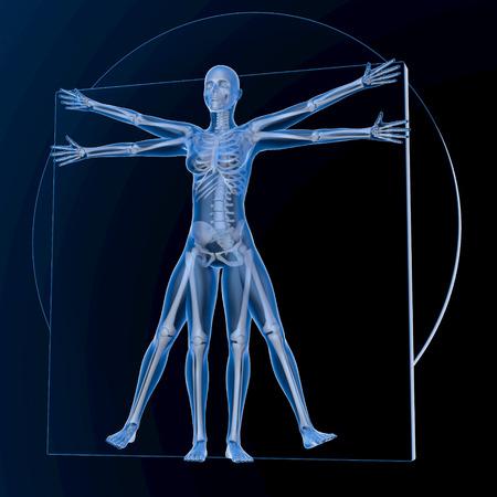 beings: Leonardo da Vinci Vitruvian Woman, transparent blue on dark background, with bones, 3d rendering