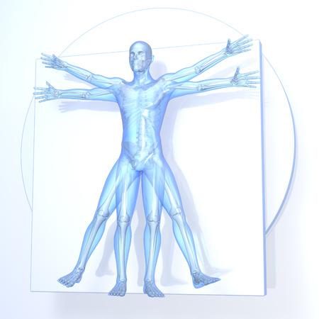 vitruvian man: Leonardo da Vinci Hombre de Vitruvio, azul transparente sobre fondo blanco, con los huesos, representaci�n 3D Foto de archivo