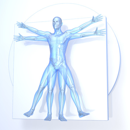 Leonardo da Vinci Vitruvian Man, transparent blue on white background, with bones, 3d rendering