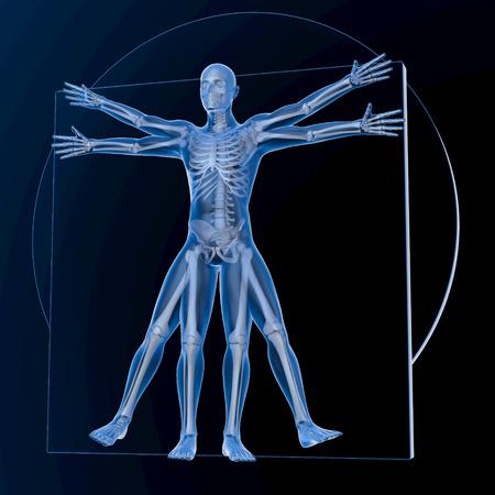 known: Leonardo da Vinci Vitruvian Man, transparent blue on dark background, with bones, 3d rendering Stock Photo