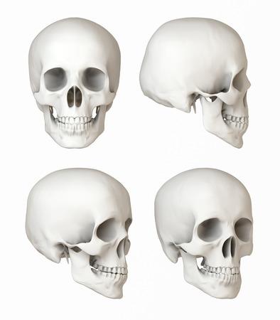 人間の頭蓋骨は、自然描写の景色がフロント サイド ビュー 写真素材
