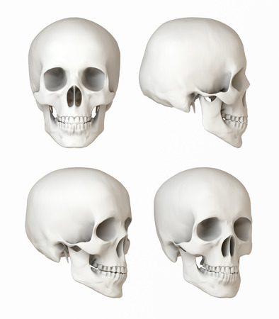 Views of a human skull, natural depiction, Front, side views Stock Photo