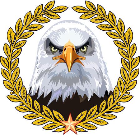 American Eagle  Bald Eagle