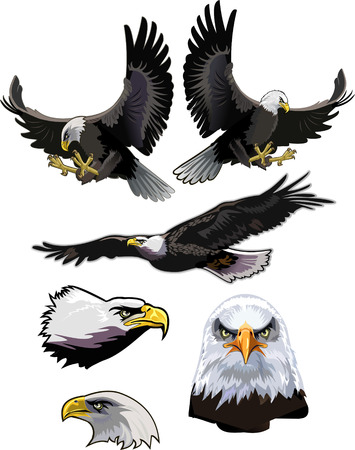 patriotic eagle: American eagle