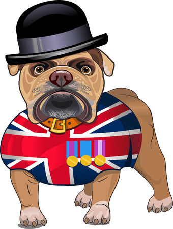 dogo: Bulldog Ingl�s y la bandera brit�nica