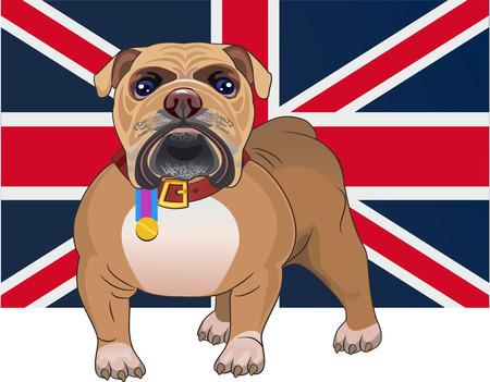 british bulldog: English Bulldog and British Flag