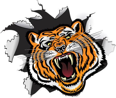 Tiger Face  イラスト・ベクター素材