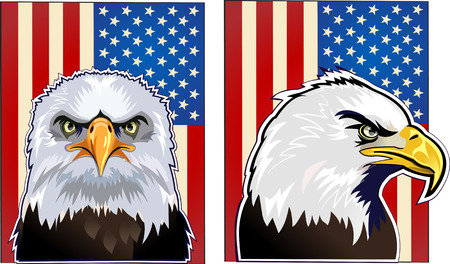 american bald eagle: American eagle and flag
