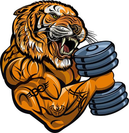 Tigre con denti sabbiosi. Sport di potenza del peso. Palestra fitness Archivio Fotografico - 75437175