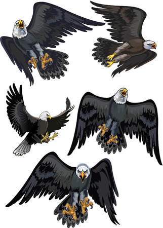 American Bald Eagle. Vector