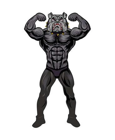 muscle athletic body of english bulldog