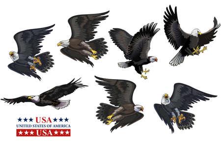 American eagle (bald eagle) and flag