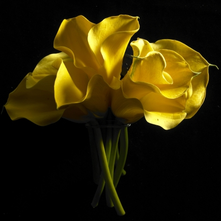 Flower on a black background. Stock Photo
