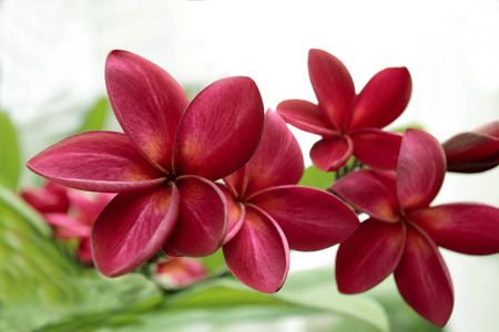 Beautiful flower on tree