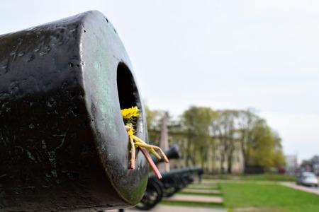 gunnery: gun and flowers