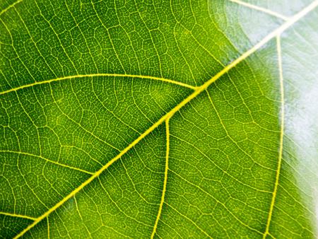 green nature background of leaf
