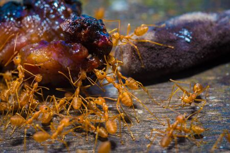 work less: group red ants walking on the tree and table to success, teamwork concept