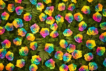 The walls are adorned with a rainbow roses and fern leaves.