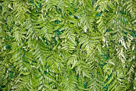 The walls are made from the leaves of a fern.