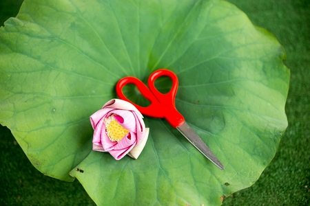 Pink lotus and red scissors resting on a lotus leaf. photo